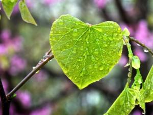 photo of leaf, rain, water